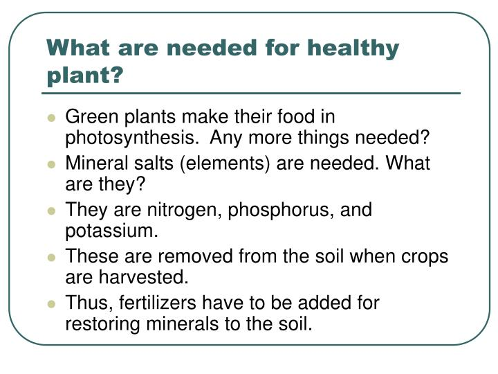 What are needed for healthy plant?