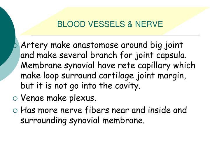 BLOOD VESSELS & NERVE
