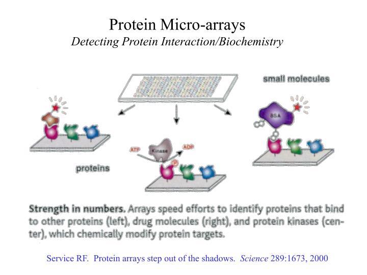 Protein Micro-arrays