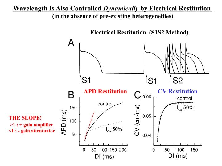 Electrical Restitution  (S1S2 Method)