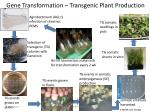 gene transformation transgenic plant production