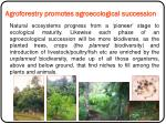agroforestry promotes agroecological succession