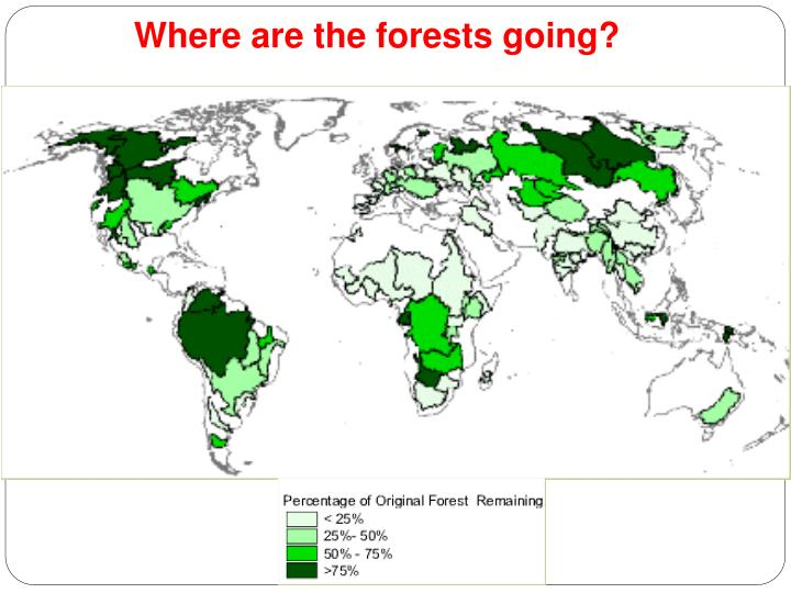 Where are the forests going?