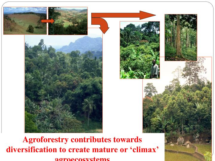 Agroforestry contributes towards diversification to create mature or 'climax' agroecosystems