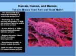 human human and human towards human heart parts and heart models