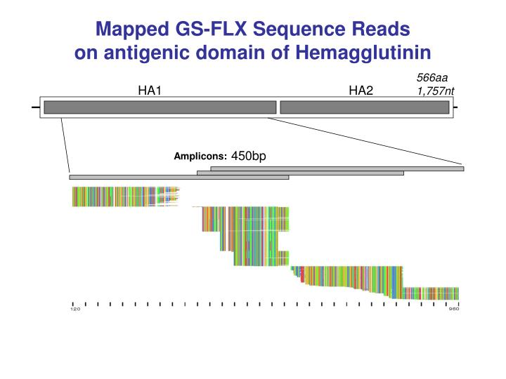 Mapped GS-FLX Sequence Reads