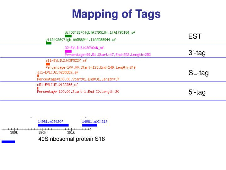 Mapping of Tags