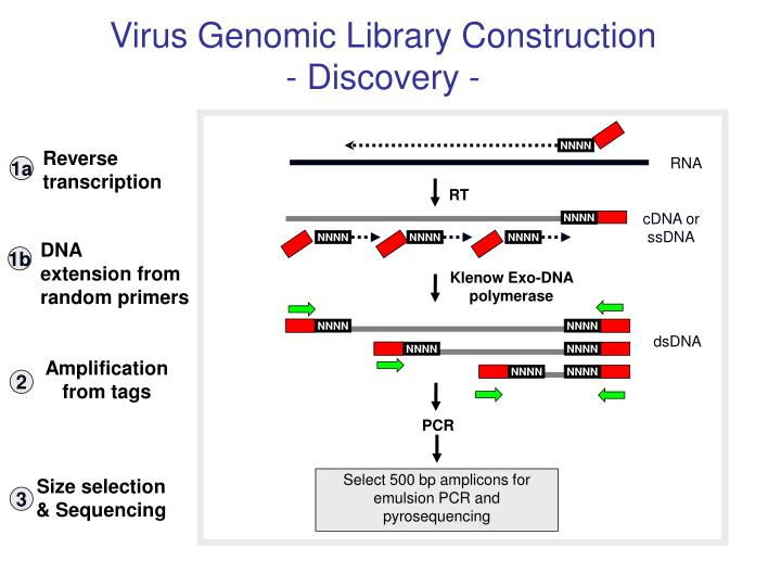 Virus Genomic Library Construction