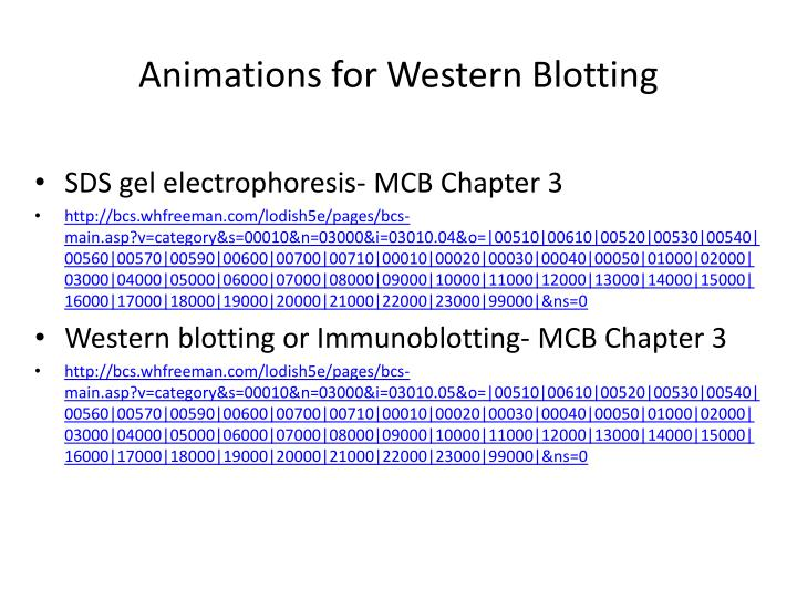 Animations for Western Blotting