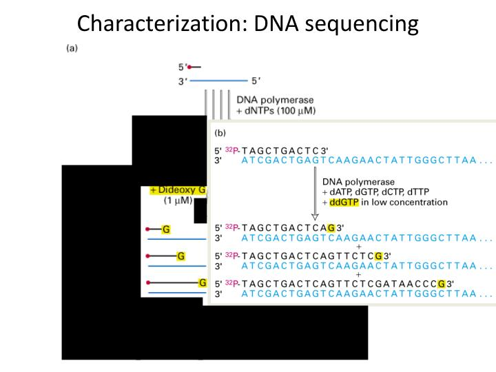 Characterization: DNA sequencing