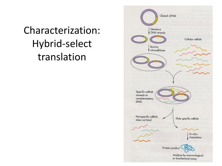 Characterization: Hybrid-select translation