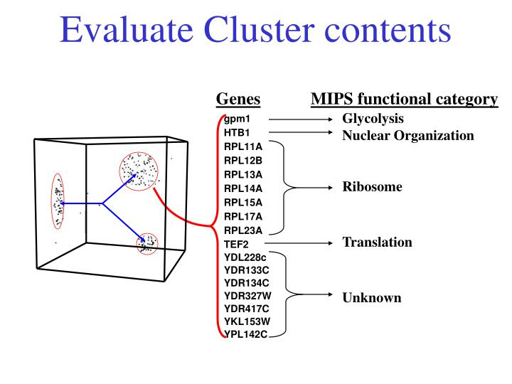 Evaluate Cluster contents