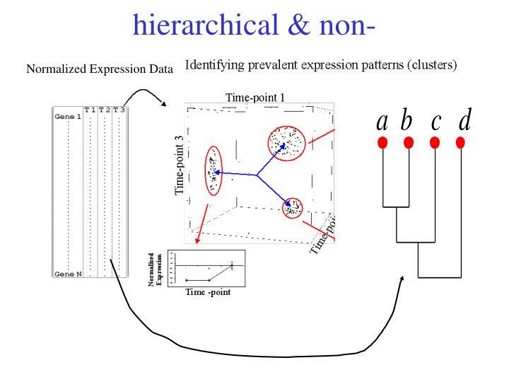 hierarchical & non-