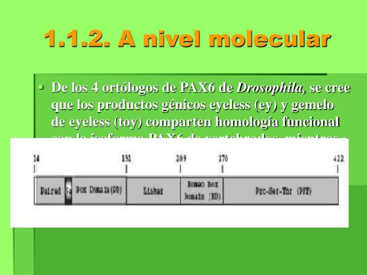 1.1.2. A nivel molecular