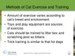 methods of cat exercise and training