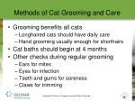 methods of cat grooming and care