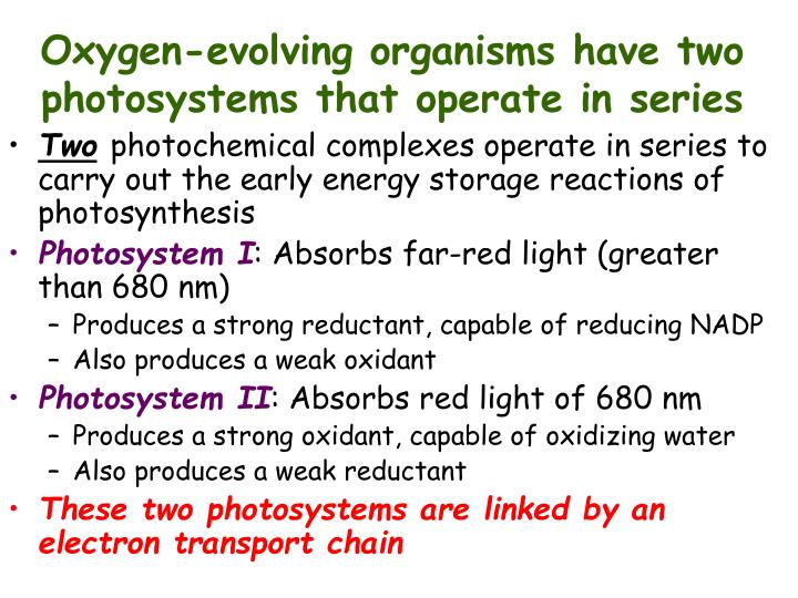 Oxygen-evolving organisms have two photosystems that operate in series