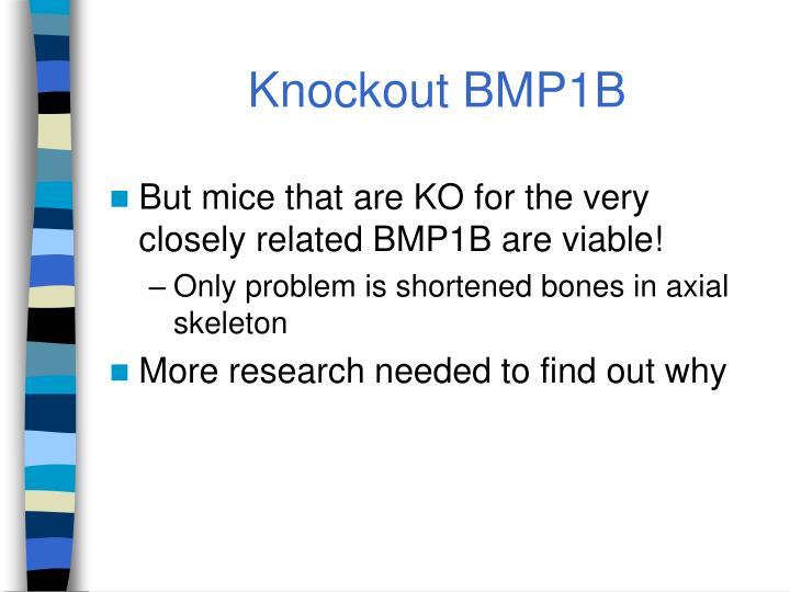 Knockout BMP1B