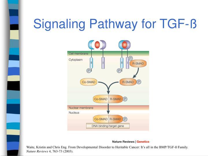 Signaling Pathway for TGF-