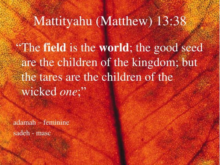 Mattityahu (Matthew) 13:38