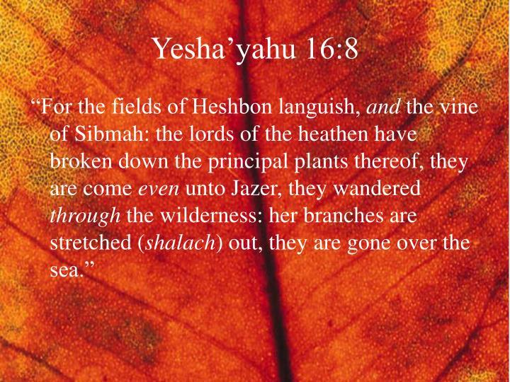 Yesha'yahu 16:8
