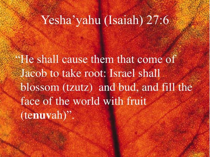 Yesha'yahu (Isaiah) 27:6