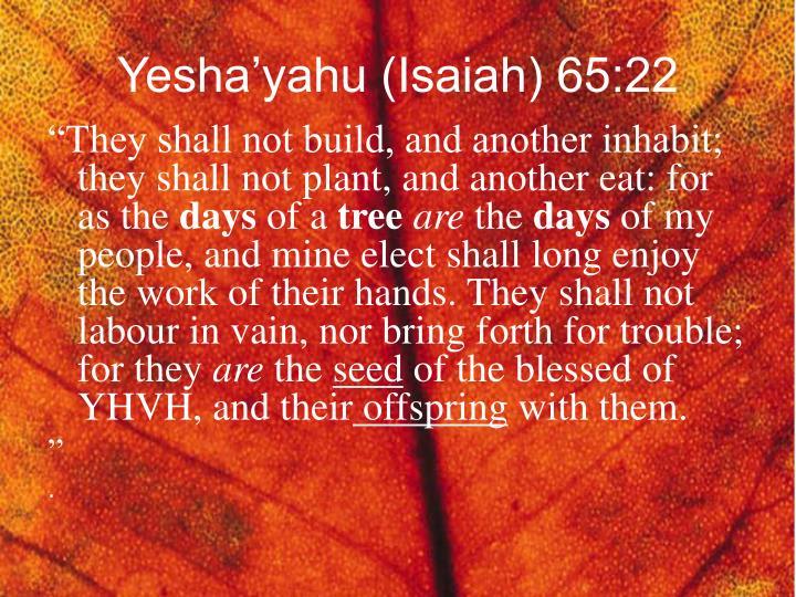 Yesha'yahu (Isaiah) 65:22