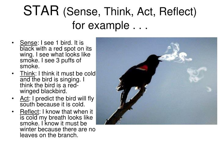 Star sense think act reflect for example
