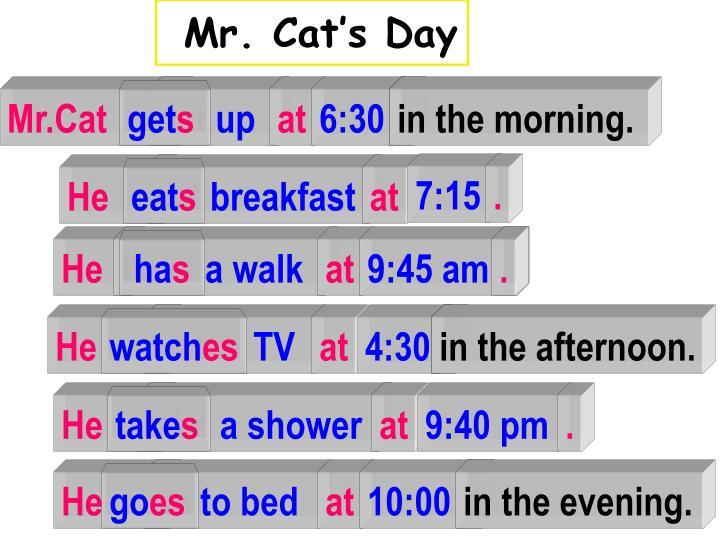 Mr. Cat's Day