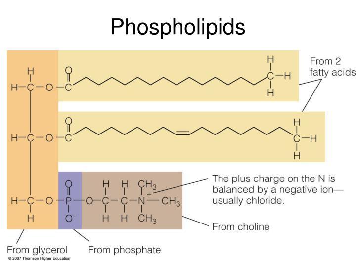Phospholipids