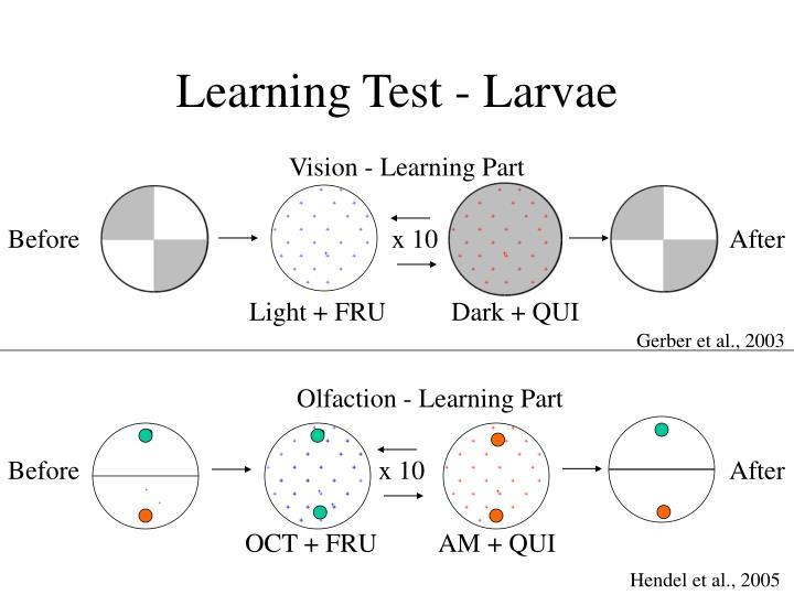 Learning Test - Larvae