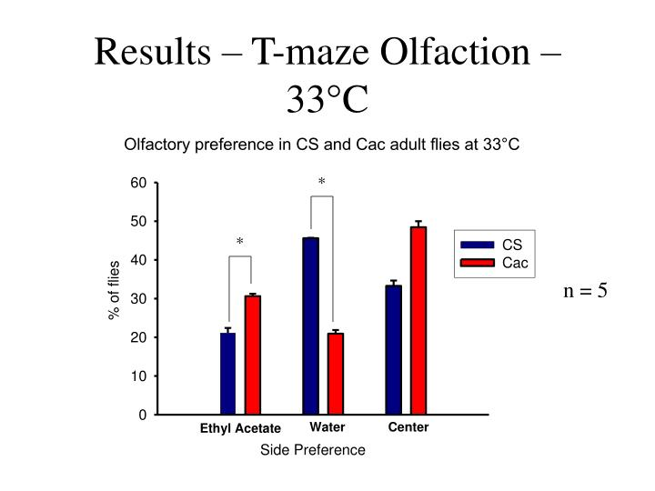 Results – T-maze Olfaction – 33