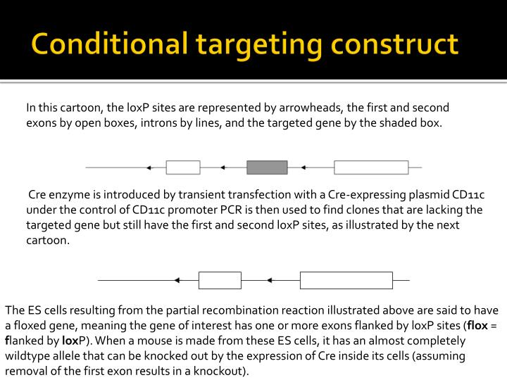 Conditional targeting construct