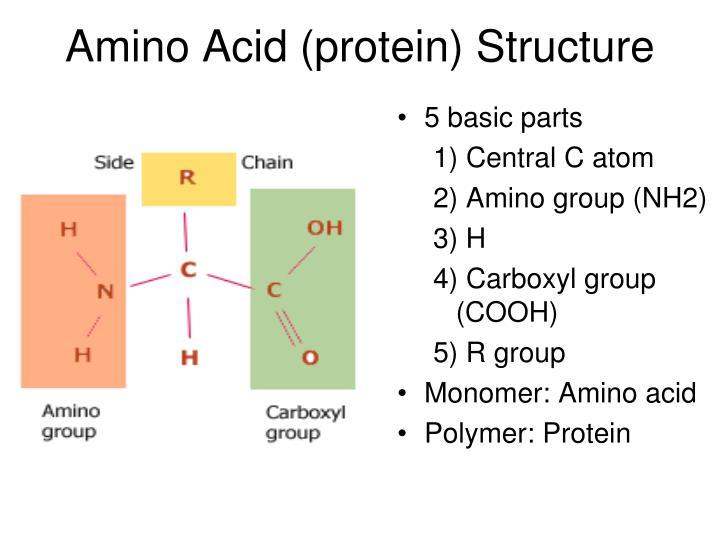 Amino Acid (protein) Structure