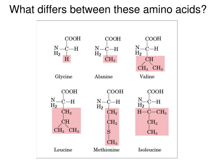 What differs between these amino acids?