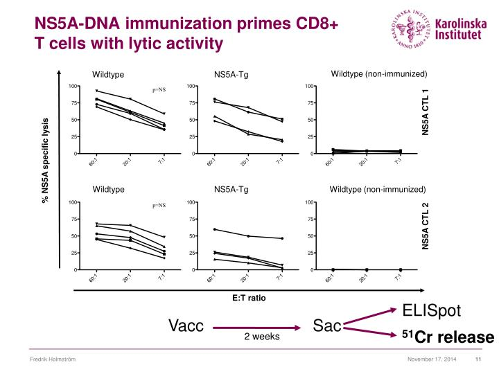 NS5A-DNA immunization primes CD8+ T cells with lytic activity