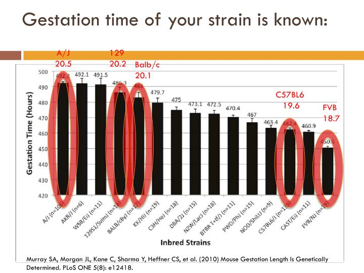 Gestation time of your strain is known: