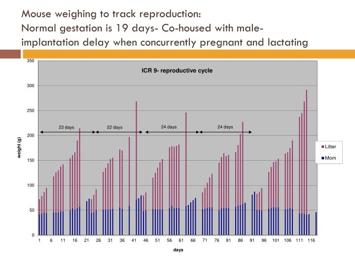 Mouse weighing to track reproduction: