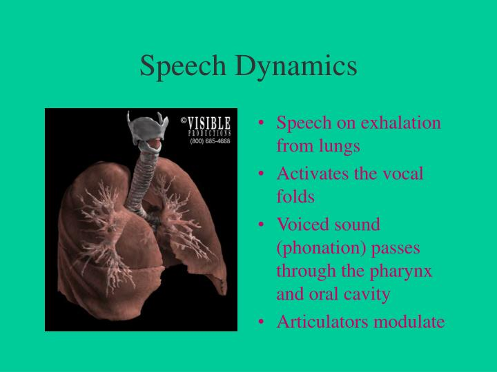Speech Dynamics