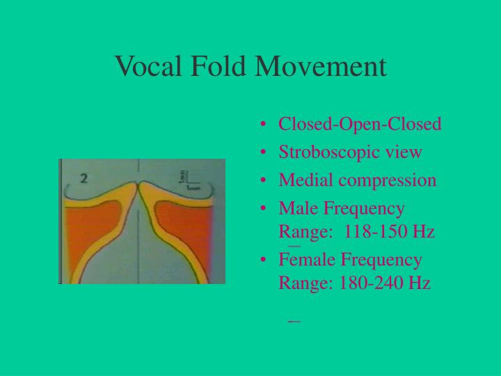 Vocal Fold Movement