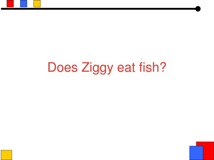 Does Ziggy eat fish?