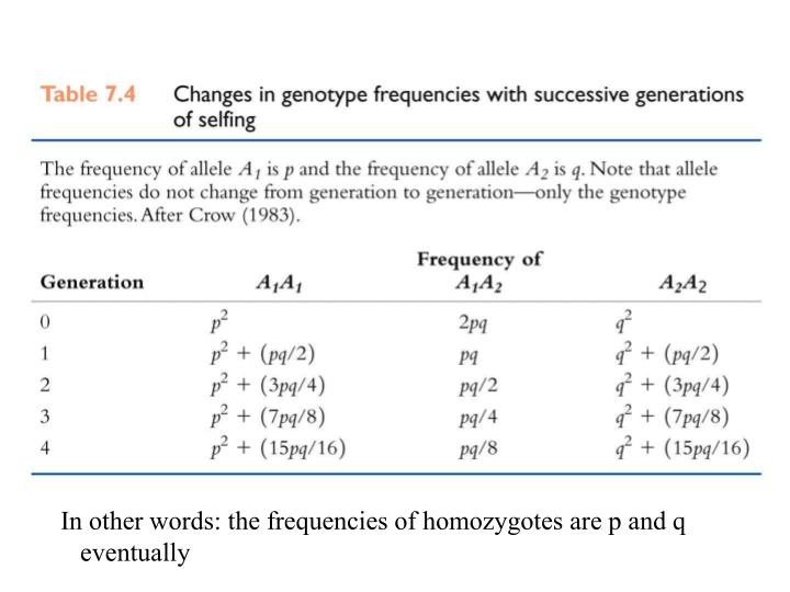 In other words: the frequencies of homozygotes are p and q