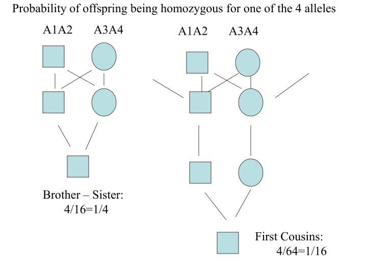 Probability of offspring being homozygous for one of the 4 alleles