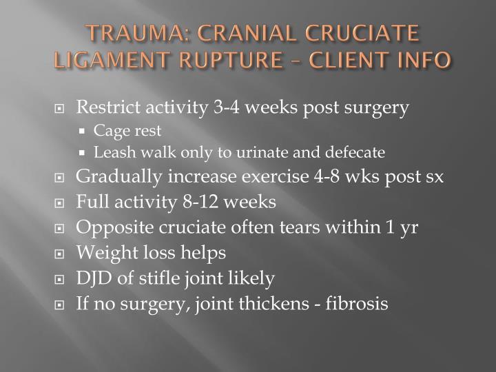 TRAUMA: CRANIAL CRUCIATE LIGAMENT RUPTURE – CLIENT INFO