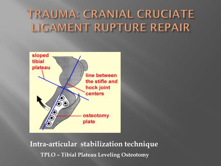 TRAUMA: CRANIAL CRUCIATE LIGAMENT RUPTURE REPAIR