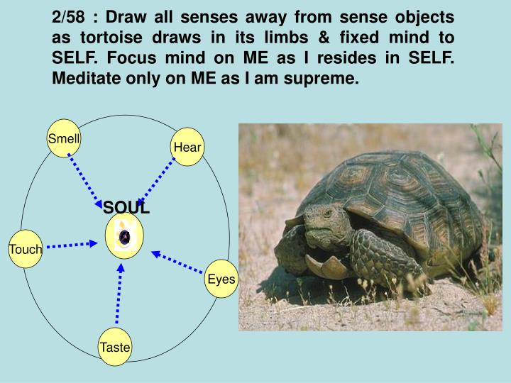2/58 : Draw all senses away from sense objects as tortoise draws in its limbs & fixed mind to SELF. Focus mind on ME as I resides in SELF. Meditate only on ME as I am supreme.