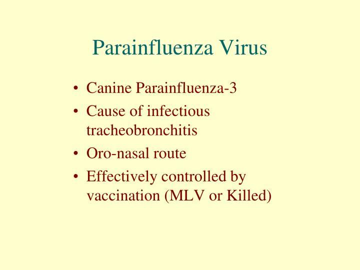 Parainfluenza Virus
