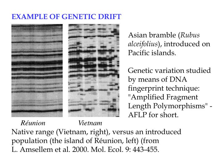 EXAMPLE OF GENETIC DRIFT
