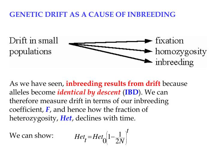 GENETIC DRIFT AS A CAUSE OF INBREEDING