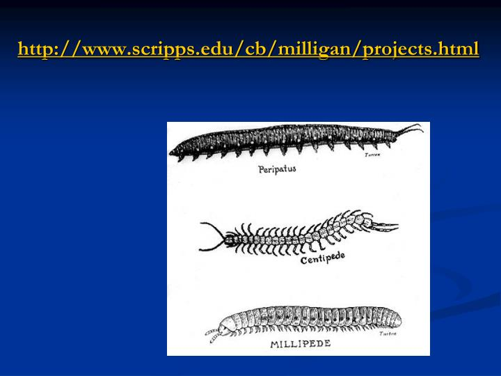 http://www.scripps.edu/cb/milligan/projects.html